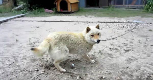 縦横無尽に動き続ける羊顔の犬。カメラに向かってくる力強さに思わず仰け反る