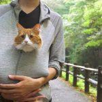 マイナスイオンに癒されたニャン。ネコが飼い主と一緒に森の中を散歩する姿に癒される