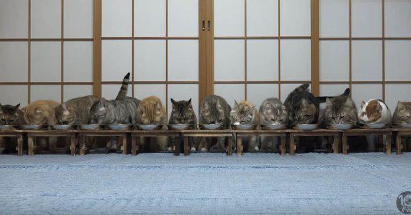 大家族の平和な食事がまさかの事態に…?一斉に逃げ始める猫ちゃんたちにびっくり!