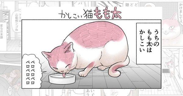 全力でシュール!かしこすぎて喋れる猫とギャルの日常漫画がクセになる