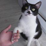 猫に「お手」を教える!お役立ちなペットのしつけハウツー動画がためになる