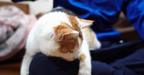 悲しみのご主人…飼い主よりも友人が好きすぎて足にしがみつく猫