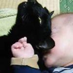 キモチよくスリスリしていた物体が赤ちゃんだと気付いた時の黒猫の反応とは…?