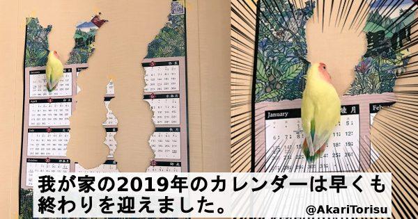 【2019年が消滅】ハプニングは付き物!可愛いペットとの「噛み合わない生活」7選