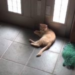 あまりのことに呆然…笑 外に出たい猫 vs それを巧妙にかわす少年のアツき攻防戦