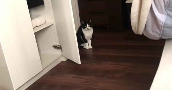 飼い主を可愛い声で起こそうとする猫。しかし、ご主人からの二度寝のお誘いが…