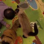 赤ちゃんが自分以外にチュー!それに激しく嫉妬する猫の様子が猫好きの心をくすぐる