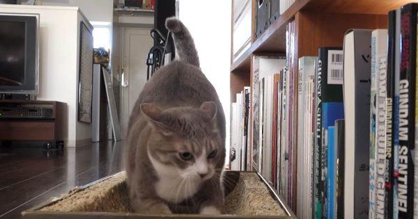 見事なスライディング爪とぎ! トイレの後に必ず爪をとぐ猫がジワる