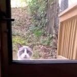 ブチギレじゃねぇか!笑 家に入れてくれないご主人に怒りの猛抗議をする猫がジワジワくる