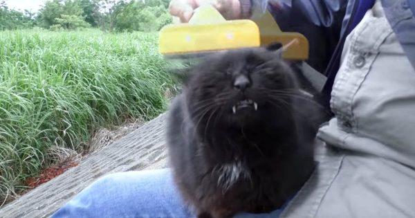 地域猫の暴君がやってきた…!しかし威嚇しながらも甘えるツンデレっぷりに笑ってしまう