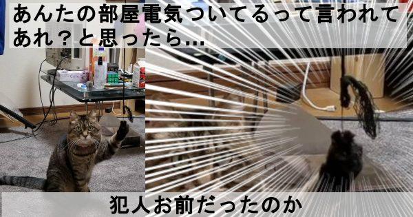 猫イタズラ.jpg