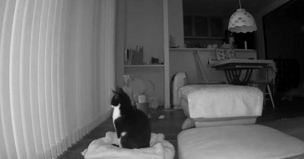 寂しさからの解放!飼い主帰宅と同時に元気を取り戻す猫が可愛すぎる