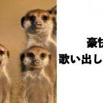 腹から笑って温まろう!寒さを吹き飛ばす愛くるしい動物ボケて 10選
