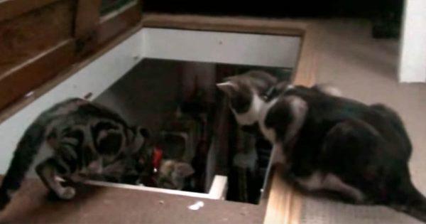 猫のショートコント!「ダチョウ倶楽部」がいろんな意味でヤバい