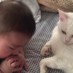 赤ちゃんと寝ている猫の頭がゴッツンコ!猫の神対応にほっこりする