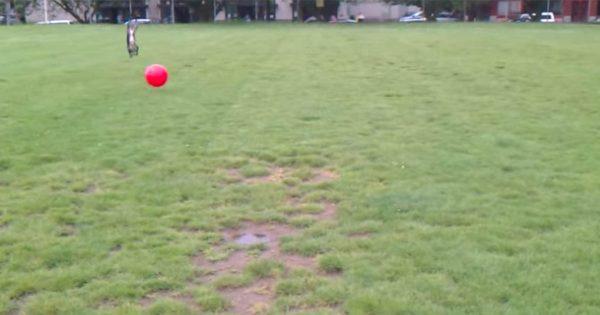 こいつ無敵か??? ボールに引っかかり大ジャンプした犬、物ともせず興奮状態を維持