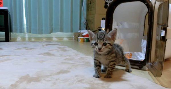 扉を開けたら別世界!新しい家に来た子猫の反応が猫好きにはたまらにゃい