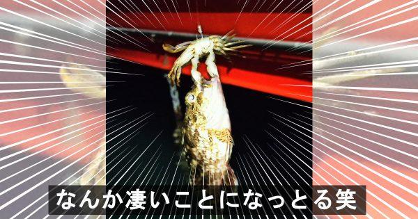 カニ「獲ったどぉ!」ドラマに溢れた釣り人たちの戦果報告 6選