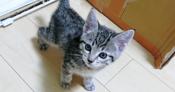 待って、鼻血出ちゃう/// 飼い主さんの身体をよじ登る子猫に癒やされる