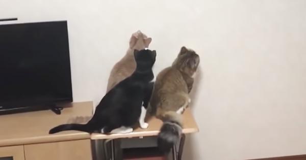 キツい臭いに興味津々!カメムシを追っかける猫の反応が予想外