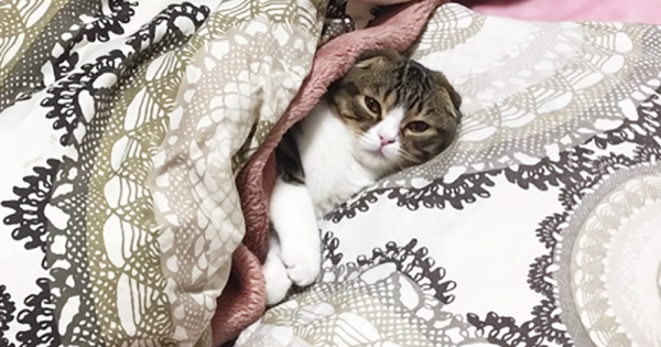こっちまでウトウト…お布団の魅力に気づいてしまった子猫が癒し効果抜群!
