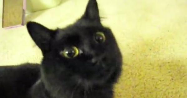 ただの痴話喧嘩!しゃべる猫が帰りの遅いご主人に「ばかやろう」の一言