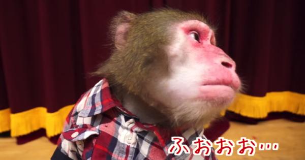な、なんじゃこりゃあ!お猿さんが初めてハッカ飴を食べたときのリアクション
