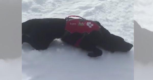 楽しそうで何より(笑)雪すべりにハマってしまった救助犬が可愛い