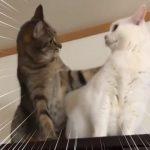 「ガンバレよ!」「お…おう」人間っぽい気まずさが癖になる「激励猫」が話題に!