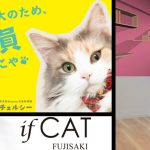 猫社員に猫マンション!?福岡の「ニャンコ都市伝説」がマジだったと判明