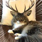 本当に猫だよね!?二度見しちゃう不思議かわいいニャンコ珍八景