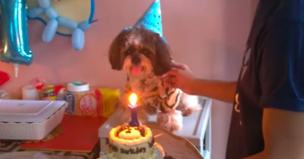 1歳の誕生日パーティー!まさかろうそくの火を消せるとは