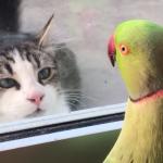かわいすぎて笑う!猫に「いないいないばあ」をするオウム