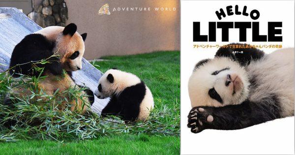 ジャイアントパンダの赤ちゃんが屋外デビューでファン歓喜!最新パンダグラビアも発売