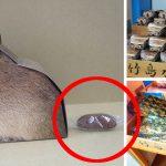 館長「私の考案です」うんこを放出するカピバラのお菓子について水族館に聞いてみた