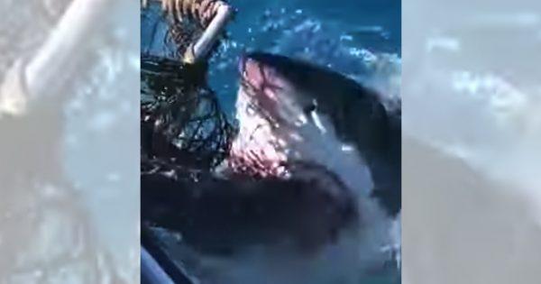 パニック映画さながら!腹ペコの巨大サメが船に襲いかかる瞬間にヒヤり