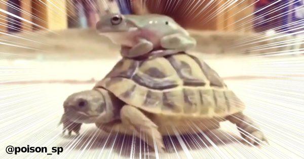 カエルと亀、交渉成立