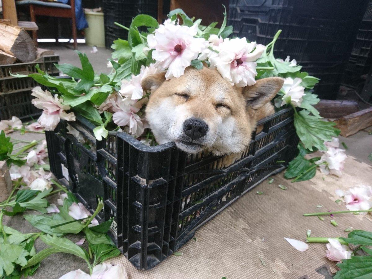inu_flower3