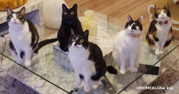 猫圧がすごい動画