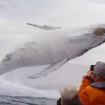 迫力120点満点!巨大なクジラが乗客の目の前で大ジャンプを披露
