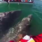 巨大なクジラが大接近!まるで遊んでいるような人懐っこさにビックリ