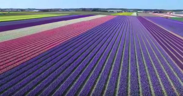 美しすぎて絶句!オランダの花畑が最高に幻想的