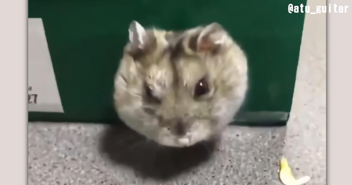 【衝撃の瞬間】ハムスターの顔が豹変する動画が話題に