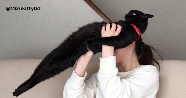 ほんとに猫なのか