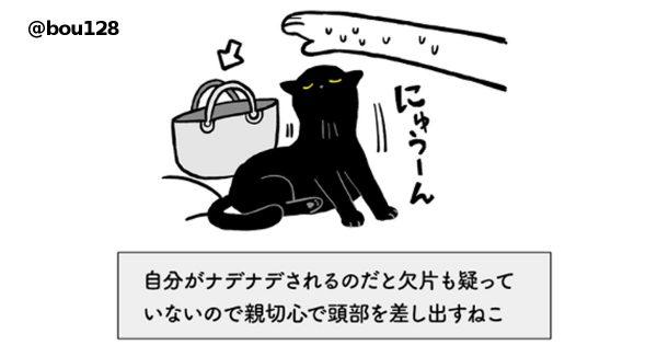 猫の承認欲求