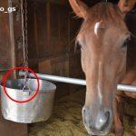 よ〜く見てね... 心優しい馬がエサを食べない理由に笑う