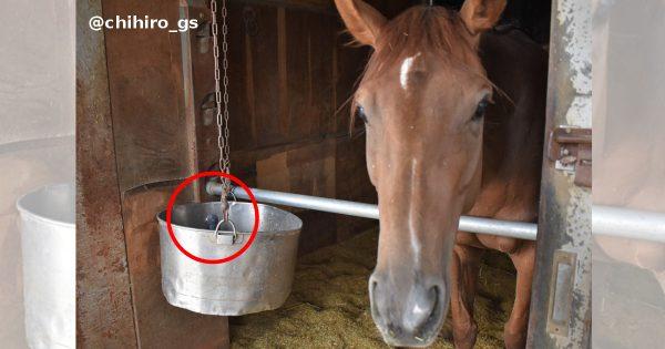 馬のエサ箱に入るハト