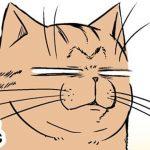 2匹のネコが繰り広げる「ネコあるある」を描いた漫画がおもしろい