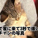 【いくら見てもたりない】ネコのかわいさ詰め込みました 7選