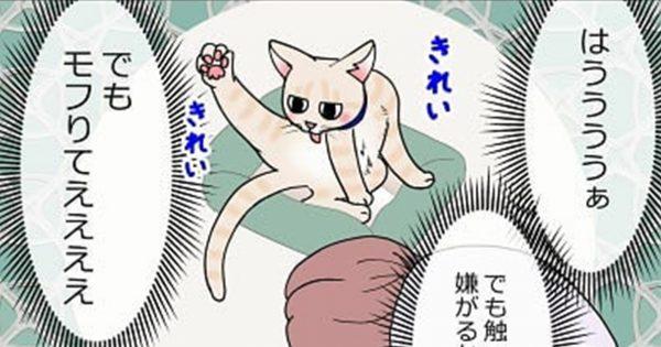 ツンデレな2匹が繰り広げる「ネコあるある」にニヤニヤが止まらない